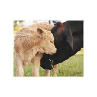A Mother's Love Cow & Calf Canvas Print