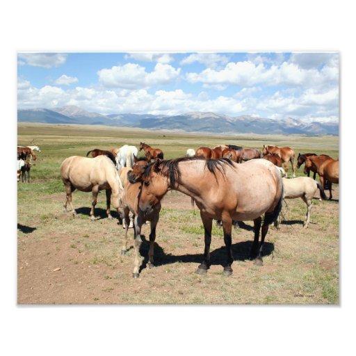 A Mothers Love Horses Photo Art