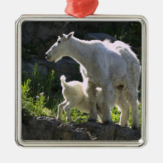 A mountain goat nanny nurses her kid in christmas ornament