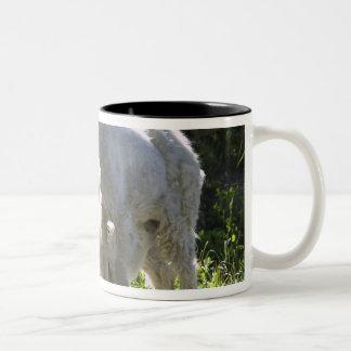 A mountain goat nanny nurses her kid in Two-Tone coffee mug
