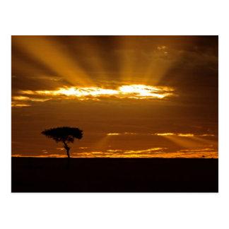 A mouth openning sunrise in the Maasai Mara Postcard
