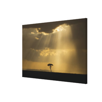 A mystical sunset on return to camp in the canvas print