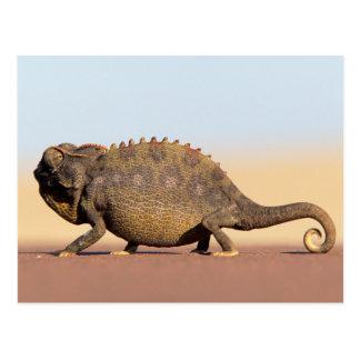 A Namaqua Chameleon walking across a sandy plain Postcard