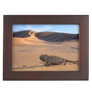 A Namaqua Chameleon walking Keepsake Box