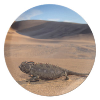 A Namaqua Chameleon walking Plate
