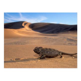 A Namaqua Chameleon walking Postcard