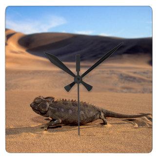 A Namaqua Chameleon walking Square Wall Clock