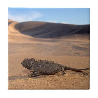 A Namaqua Chameleon walking Tile