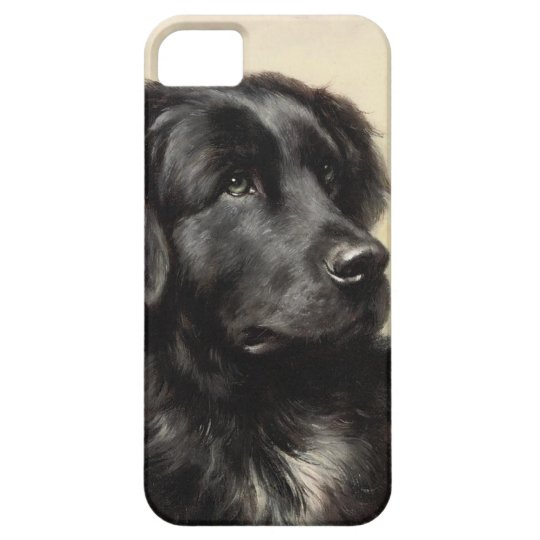 A Newfoundland iPhone 5 Case