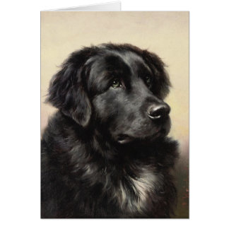 A Newfoundland Note Card