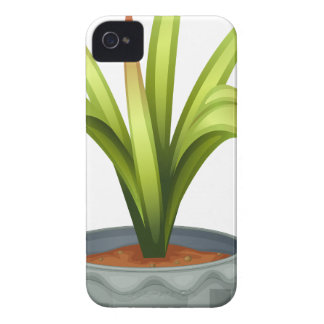 A non-flowering plant iPhone 4 Case-Mate cases