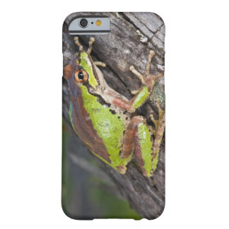 A Pacific treefrog perched on a log Barely There iPhone 6 Case