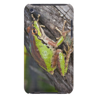 A Pacific treefrog perched on a log Case-Mate iPod Touch Case