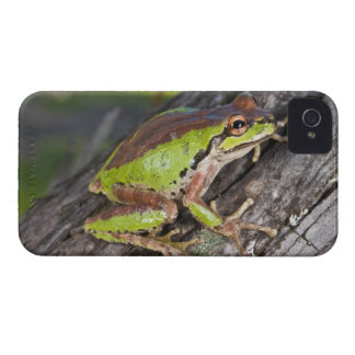 A Pacific treefrog perched on a log iPhone 4 Case-Mate Case