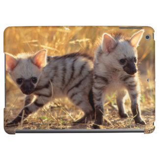 A pair of Aardwolf cubs at play