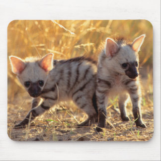 A pair of Aardwolf cubs at play Mouse Mat