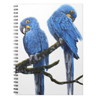 A pair of bright blue Hyacinth Macaws Spiral Notebook