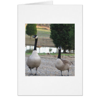A Pair Of Canada Geese Greeting Card