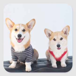 A Pair Of Corgis Sitting On A Bench Square Sticker