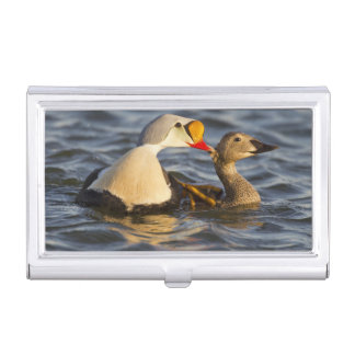 A pair of courting king eiders in a tundra pond business card holder