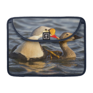 A pair of courting king eiders in a tundra pond sleeve for MacBook pro