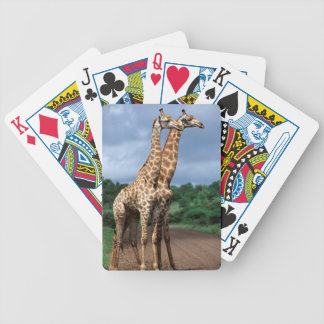 A Pair Of Giraffes On Road, Kruger National Bicycle Playing Cards