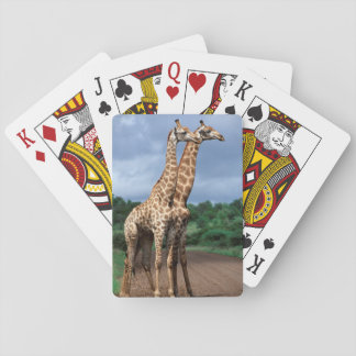 A Pair Of Giraffes On Road, Kruger National Poker Deck