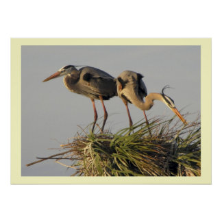 A Pair of Great Blue Herons in their  Nest Poster