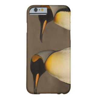 A pair of King Penguins (Aptenodytes p. Barely There iPhone 6 Case