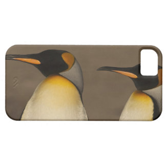 A pair of King Penguins (Aptenodytes p. iPhone 5 Case