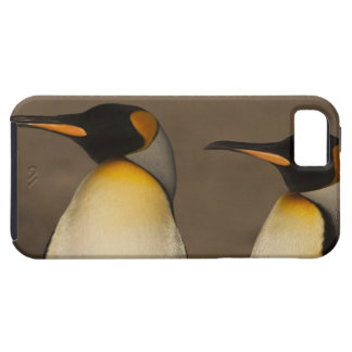 A pair of King Penguins (Aptenodytes p. iPhone 5 Covers