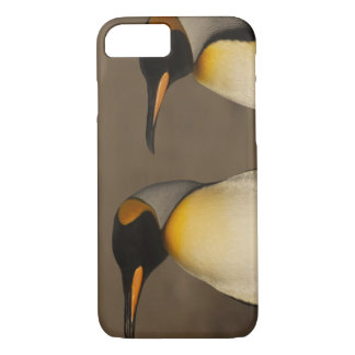 A pair of King Penguins (Aptenodytes p. iPhone 7 Case