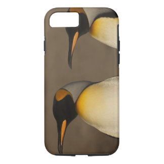 A pair of King Penguins (Aptenodytes p. iPhone 8/7 Case