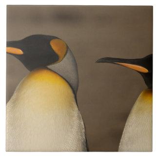 A pair of King Penguins (Aptenodytes p. Tile