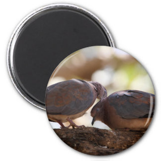 A pair of laughing doves magnet