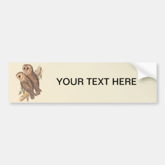 A Pair of Masked Barn Owls on a branch (painting). Bumper Sticker