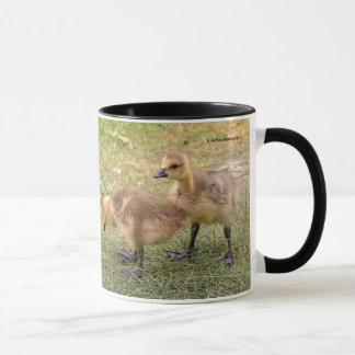 A Pair of Playful Canada Goose Goslings Mug