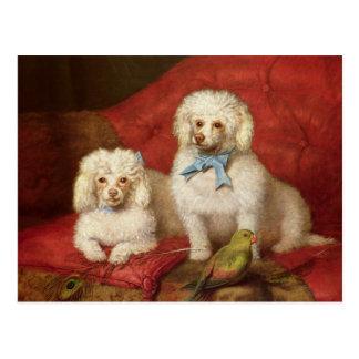 A Pair of Poodles Postcard