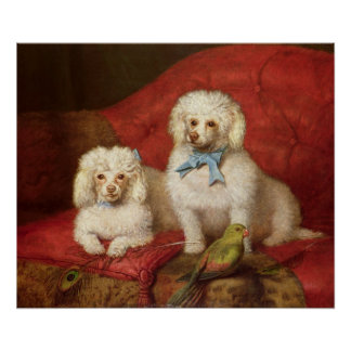 A Pair of Poodles Poster