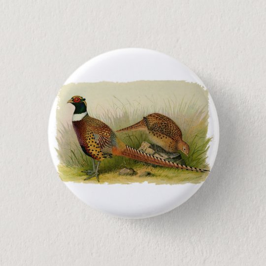 A pair of Ring necked pheasants in a