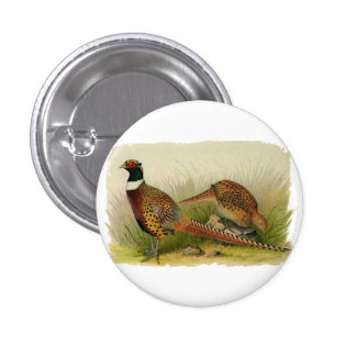 A pair of Ring necked pheasants in a grassy field 3 Cm Round Badge