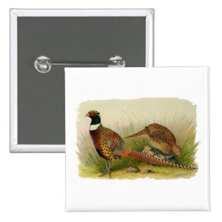 A pair of Ring necked pheasants in a grassy field 15 Cm Square Badge