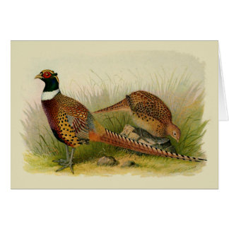 A pair of Ring necked pheasants in a grassy field Card