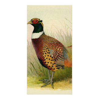 A pair of Ring necked pheasants in a grassy field Photo Greeting Card
