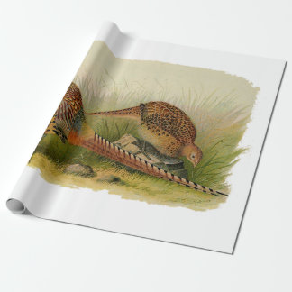 A pair of Ring necked pheasants in a grassy field Wrapping Paper