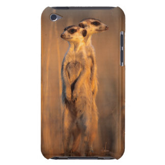 A pair of Suricates standing on a rock at sunset Barely There iPod Case