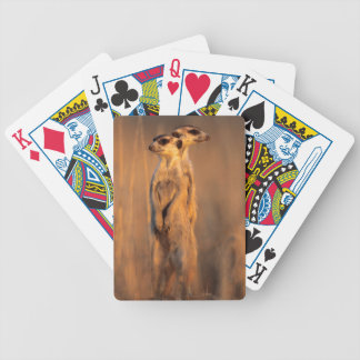 A pair of Suricates standing on a rock at sunset Bicycle Playing Cards