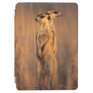 A pair of Suricates standing on a rock at sunset iPad Air Cover