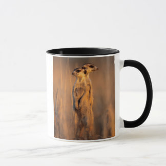A pair of Suricates standing on a rock at sunset Mug