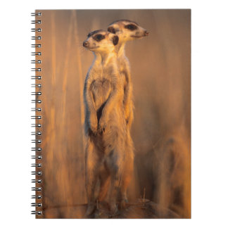 A pair of Suricates standing on a rock at sunset Spiral Notebook